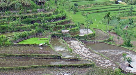 bali inland landscapes