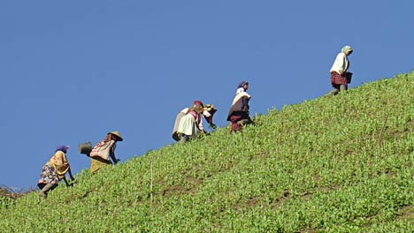 ranupani working peasants