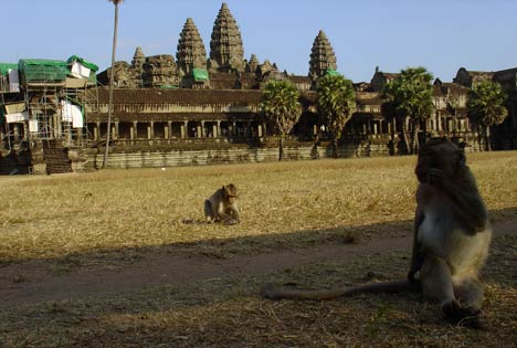 maimute cambodgia