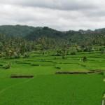 bali-rice-paddies-22